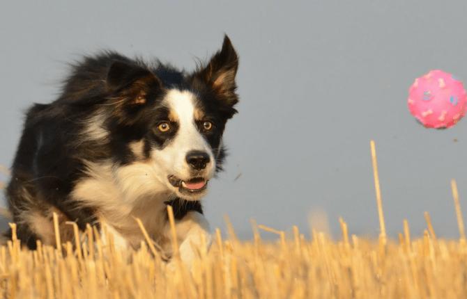 large dog pet fundraiser