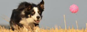 medium dog pet fundraiser