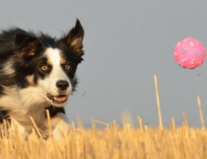 small dog pet fundraiser