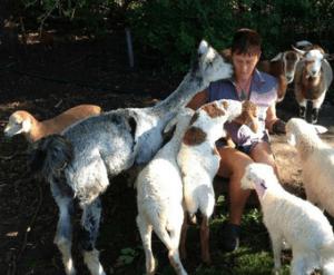 Vivs Animal Farms Fete Supplier