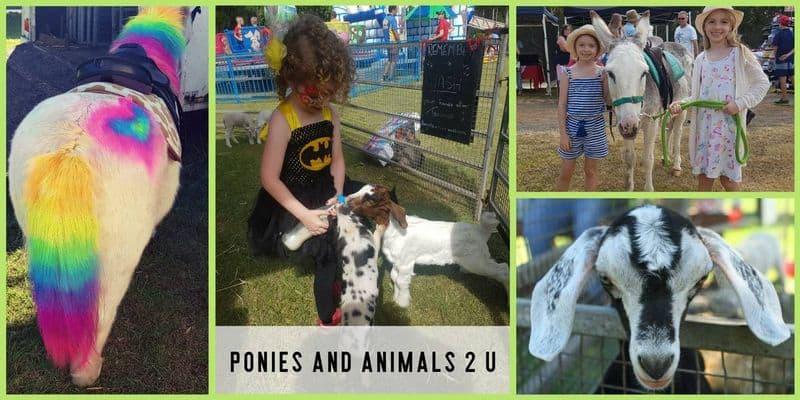 Ponies and Animals 2 U